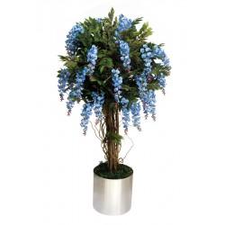Mavi Wisteria Ağacı