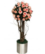 Pembe Gül Ağacı
